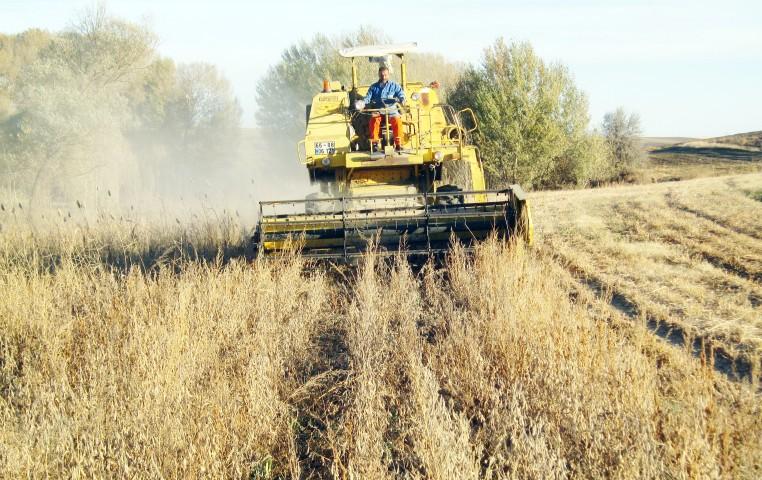 Deneme amaçlı ekilen Soya  Fasulyesinin hasadı yapıldı