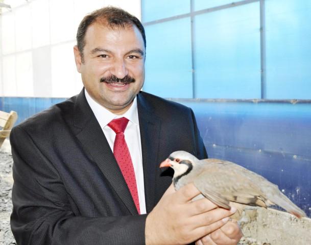 11 bin kınalı keklik  doğaya bırakılacak