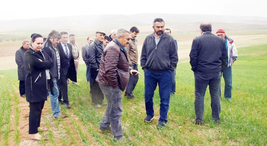 Toprak İşlemesiz Tarım  alanları çiftçiye gezdirildi