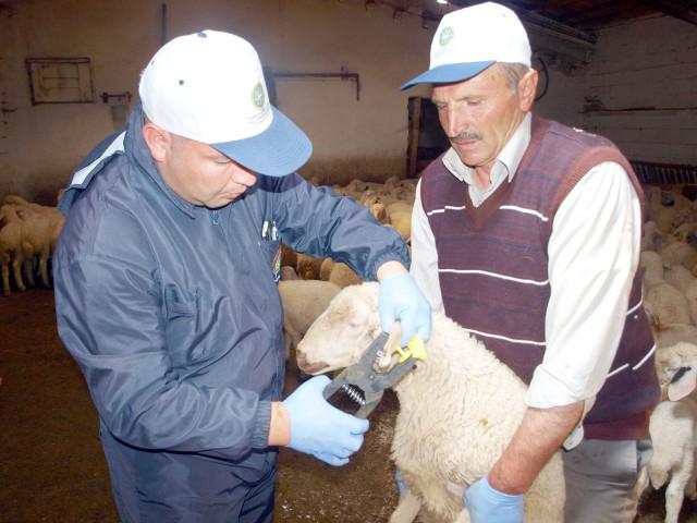 Çiftliklerde ve köylerde üreticilerin  küpesiz hayvanı kalmayacak