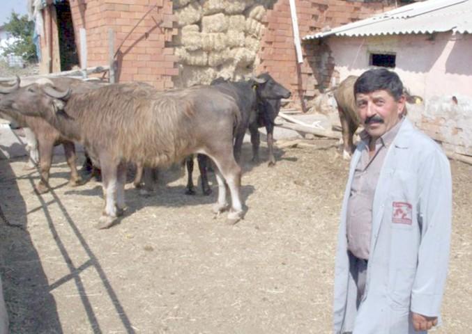 Çiftçiler kurbanlıklarını  ağıllarda besiye çekmeye başladı