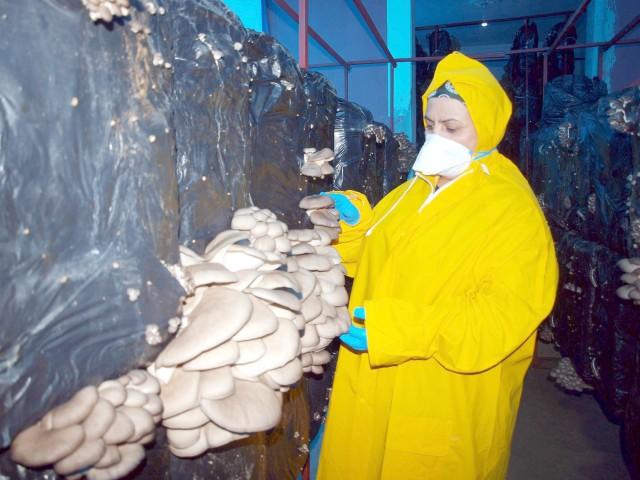 Kas hastası oğlunun tedavi  giderleri için evinde mantar üretiyor