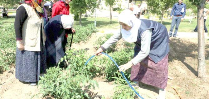 Huzurevi sakinleri hobi  bahçesinde doğal ürün yetiştiriyor