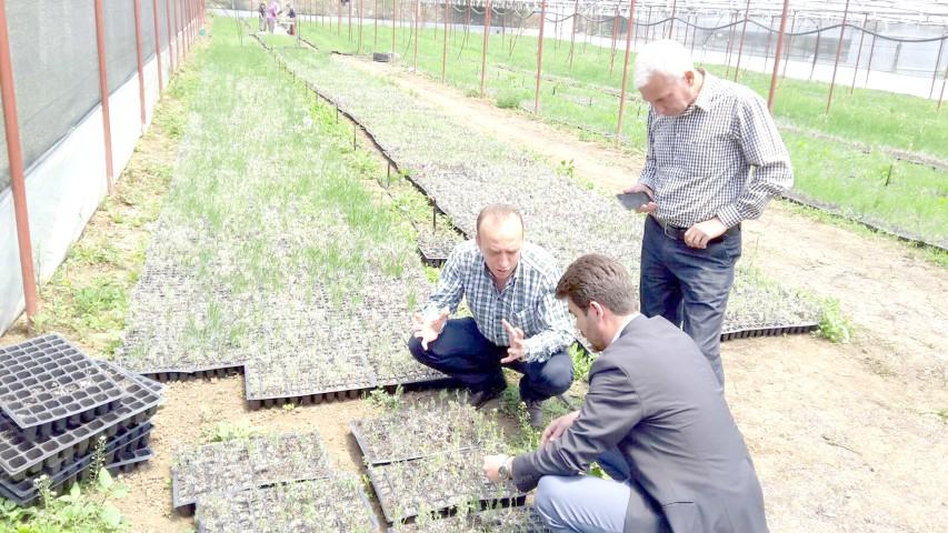 Lavanta ve salep yetiştiriciliği Orta  Anadolu çiftçisinin yüzünü güldürecek
