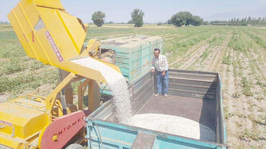 Kayseri Şeker'in sözleşmeli fasulye ekiminde hasat başladı