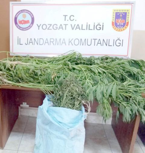 Jandarma ekiplerinden Uyuşturucu operasyonu