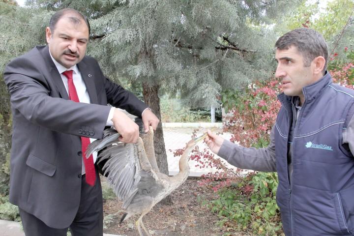 Yağmurdan dolayı uçamayan  göçmen kuşu yetkililere teslim etti