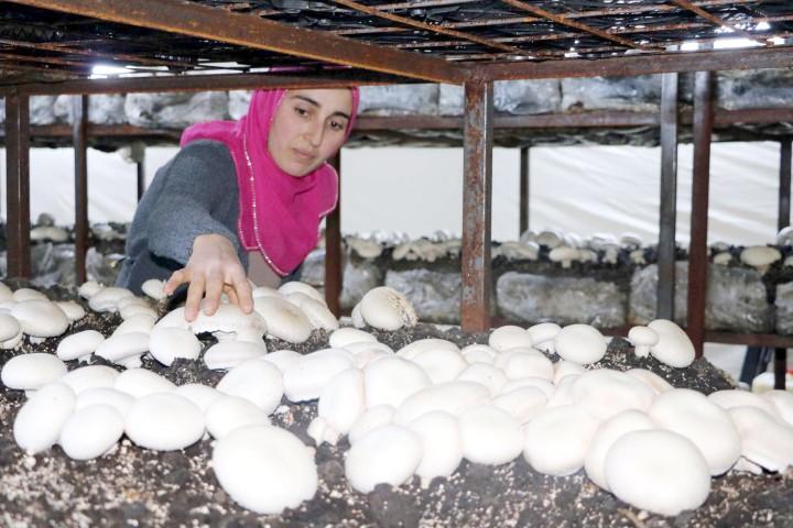 Üç çocuk annesi kurduğu mantar tesisiyle  çocuklarının eğitimine destek oluyor