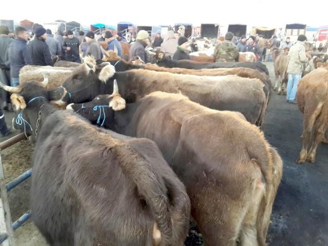 Arazide çalınan hayvanlar hayvan pazarında bulundu