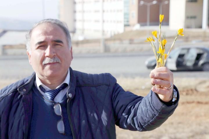 Baharın müjdecisi  çiğdem çiçekleri açtı