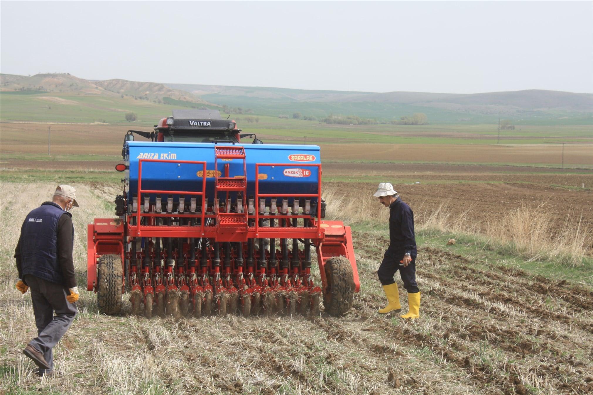 Toprak işlemesiz nohut ekimi