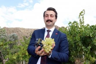 Karanlıkdere'de üzüm üretimi artırılacak