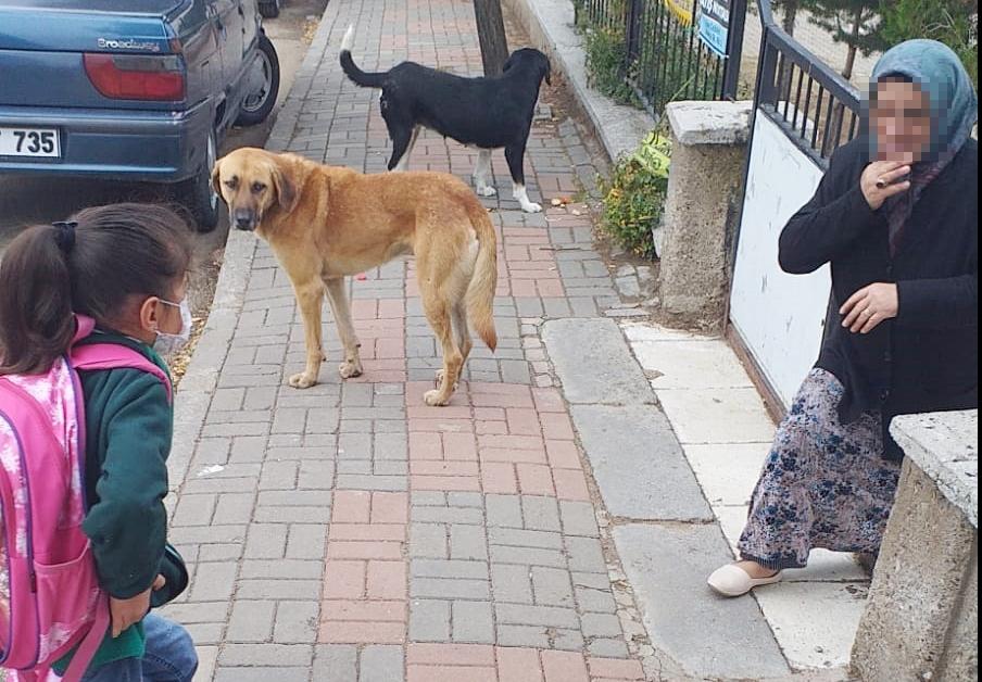 Başıboş köpekler halkı korkutuyor