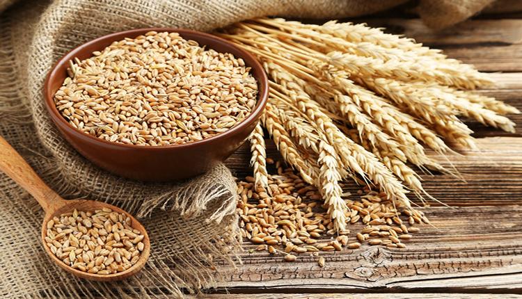 TMO 300 Bin ton buğday ithal edecek